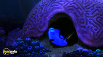 Still #2 from Finding Dory