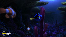 Still #4 from Finding Dory