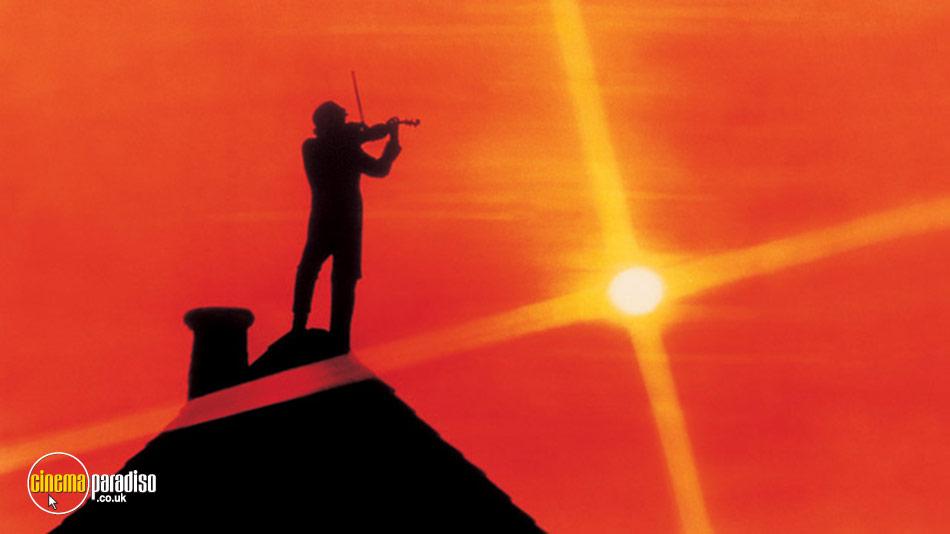 Rent Fiddler On The Roof 1971 Film Cinemaparadiso Co Uk