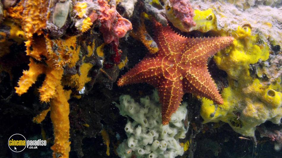 Atlantic: The Wildest Ocean on Earth online DVD rental