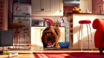 A still #4 from The Secret Life of Pets (2016)