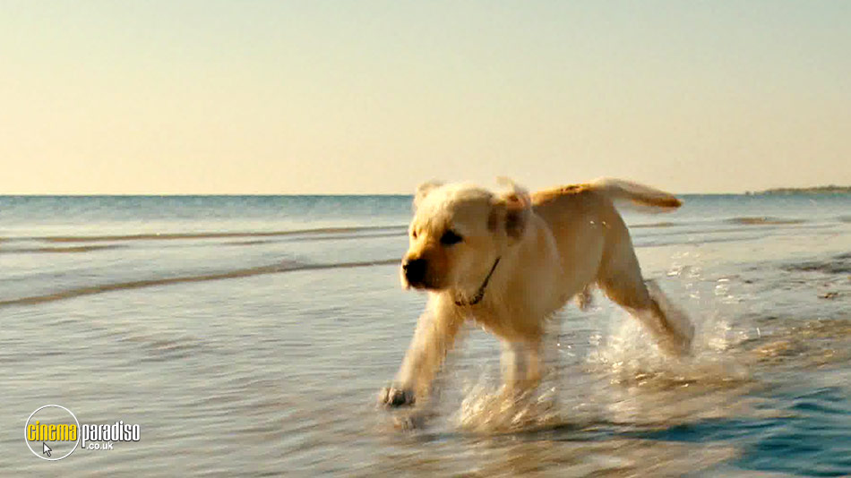 Marley and Me 2: The Puppy Years online DVD rental