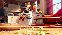 A still #9 from The Secret Life of Pets (2016)