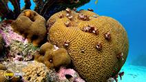 A still #30 from Ocean Aquarium (2008)