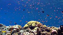 A still #28 from Ocean Aquarium (2008)