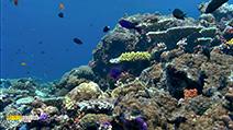 A still #27 from Ocean Aquarium (2008)