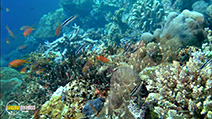 A still #26 from Ocean Aquarium (2008)