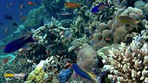 A still #25 from Ocean Aquarium (2008)