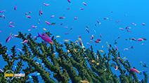 A still #24 from Ocean Aquarium (2008)