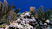 A still #23 from Ocean Aquarium (2008)