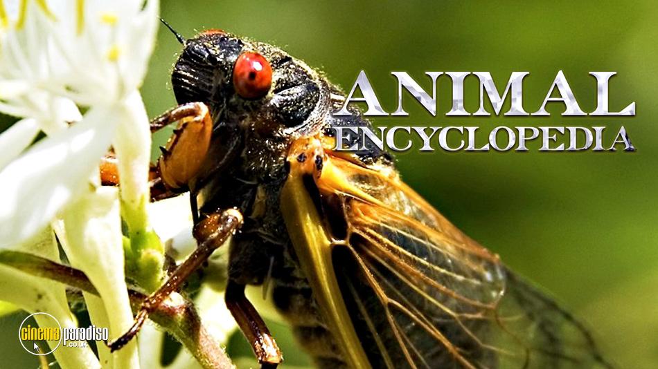 Animal Encyclopedia online DVD rental