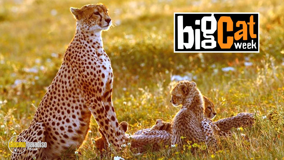 Big Cat Week (aka Big Cat Diary) online DVD rental