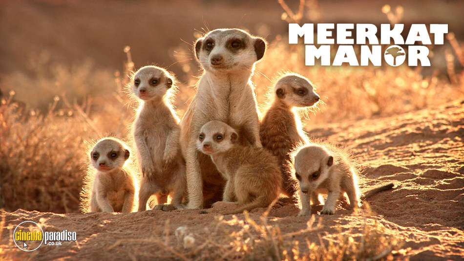 Meerkat Manor online DVD rental
