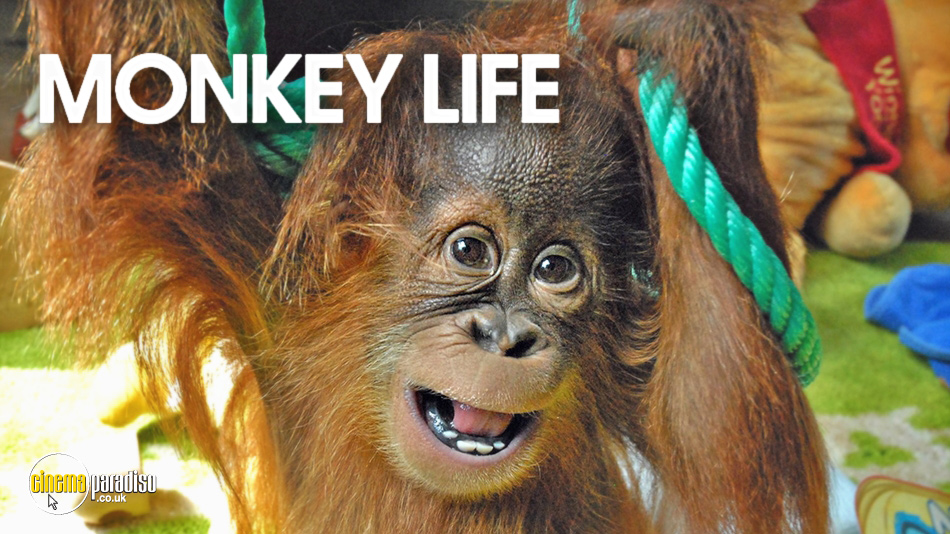 Monkey Life online DVD rental