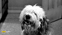 A still #32 from The Shaggy Dog (1959)
