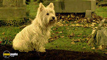 Still #4 from The Adventures of Greyfriars Bobby