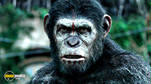 A still #3 from Dawn of the Planet of the Apes (2014)