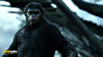 A still #1 from Dawn of the Planet of the Apes (2014)