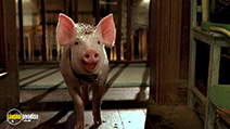 A still #1 from Babe: Pig in the City (1998)