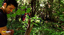 A still #9 from The Bigfoot Tapes (2012)