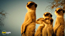 Still #8 from Meerkats: The Movie