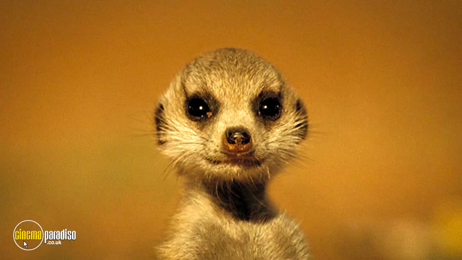 Meerkats: The Movie online DVD rental