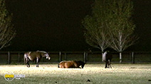 A still #17 from The Amazing World of Animal Lovers (2009)