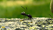 A still #47 from Minuscule: Valley of the Lost Ants (2013)