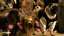 Still #3 from Beverly Hills Chihuahua 2