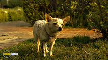 Still #4 from Beverly Hills Chihuahua 2