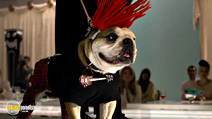 Still #5 from Beverly Hills Chihuahua 2