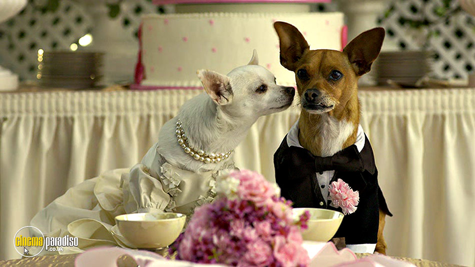 Beverly Hills Chihuahua 2 online DVD rental