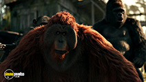 A still #8 from War for the Planet of the Apes (2017)