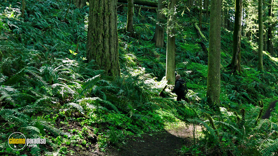 A still #8 from Leave No Trace (2018)