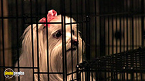 A still #9 from The Three Dogateers Save Christmas (2014)