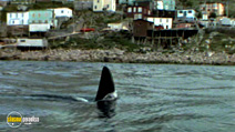 Still #7 from Orca the Killer Whale