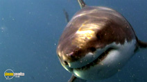 Still #5 from National Geographic: Planet Carnivore - Great White Sharks