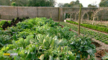 Still #1 from How to Garden Organically
