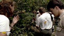 Still #5 from In the Wild: Orangutans with Julia Roberts