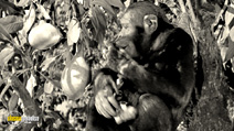 Still #3 from Tarzan's Secret Treasure/Tarzan's New York Adventure