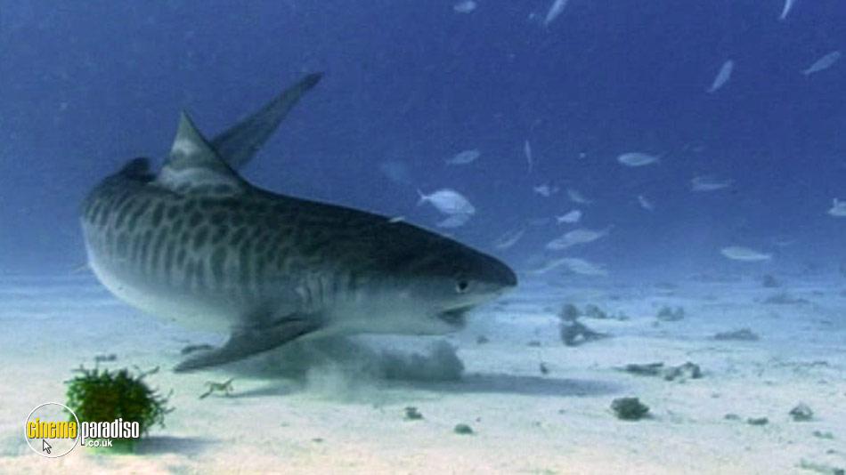 National Geographic: Tiger Sharks online DVD rental