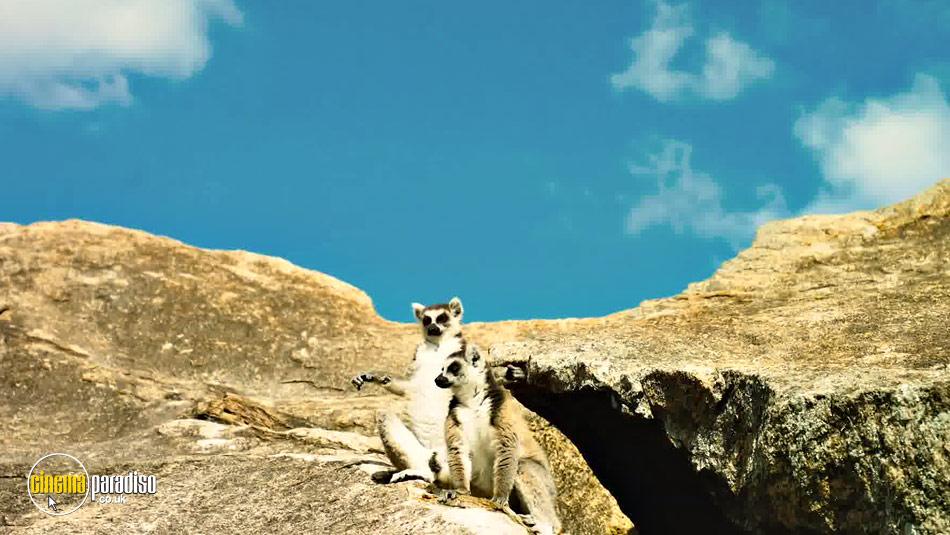 Island of Lemurs: Madagascar online DVD rental