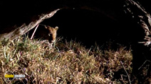 Still #4 from National Geographic: Stalking Leopards