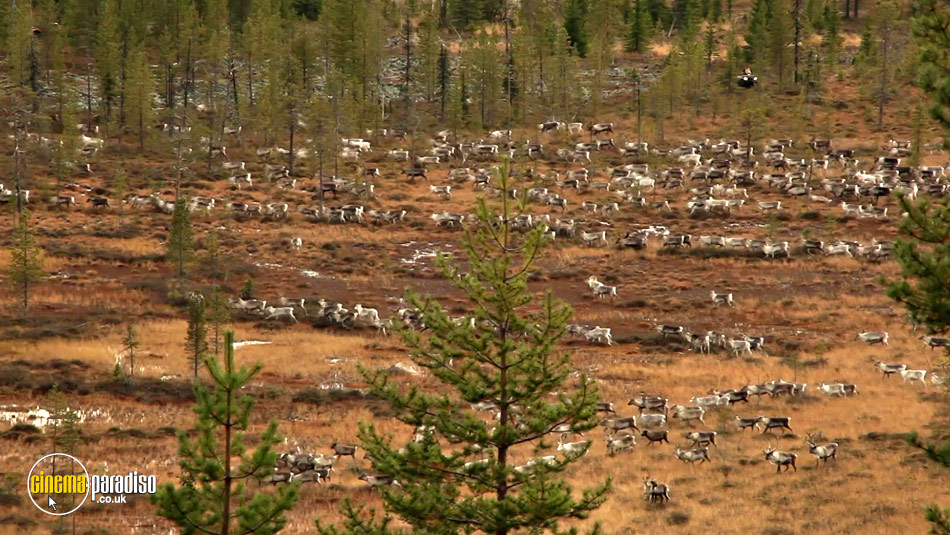Aatsinki: The Story of Arctic Cowboys online DVD rental