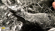Still #6 from David Attenborough: 60 Years in the Wild