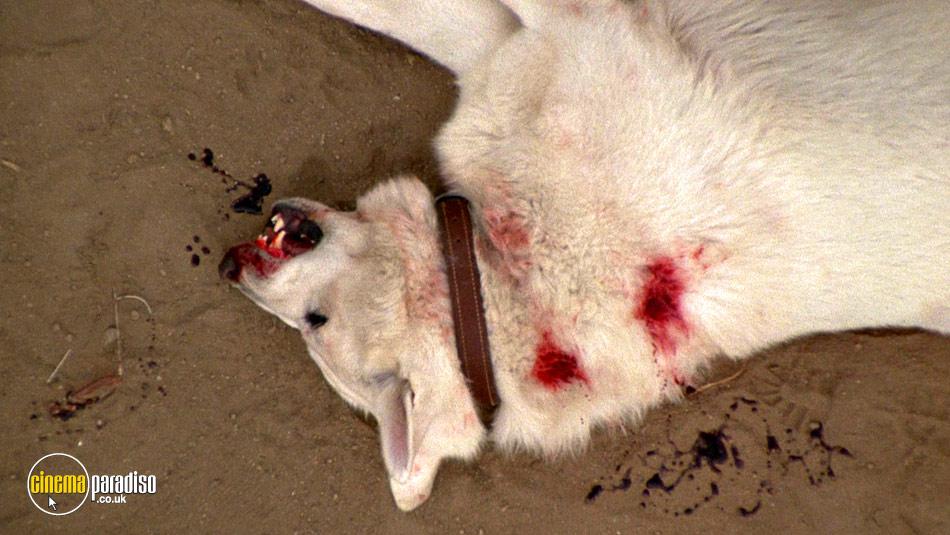 White Dog online DVD rental
