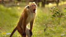 Still #4 from Monkey Kingdom