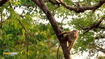 Still #5 from Monkey Kingdom