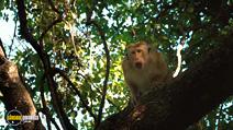 Still #6 from Monkey Kingdom