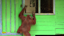 Still #4 from Monkey Planet